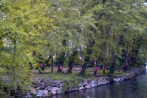 Bosque de ribeira de Sarria