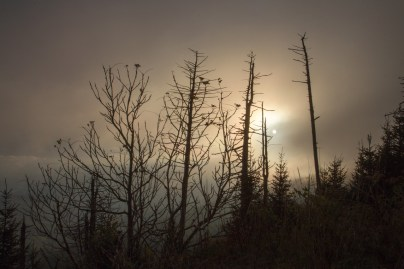 Clingman's Dome Foggy Sunset, Great Smoky Mountains National Park, TN