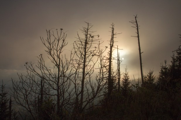 Clingman's Dome Foggy Sunset, Great Smoky Mountains National Park, TN