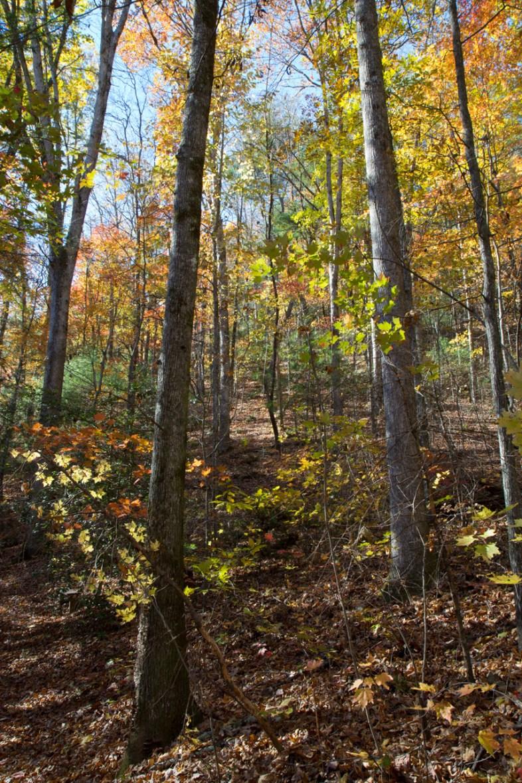 Trail, Upper Desoto Falls, Lumpkin County, GA © Adel Alamo 2014