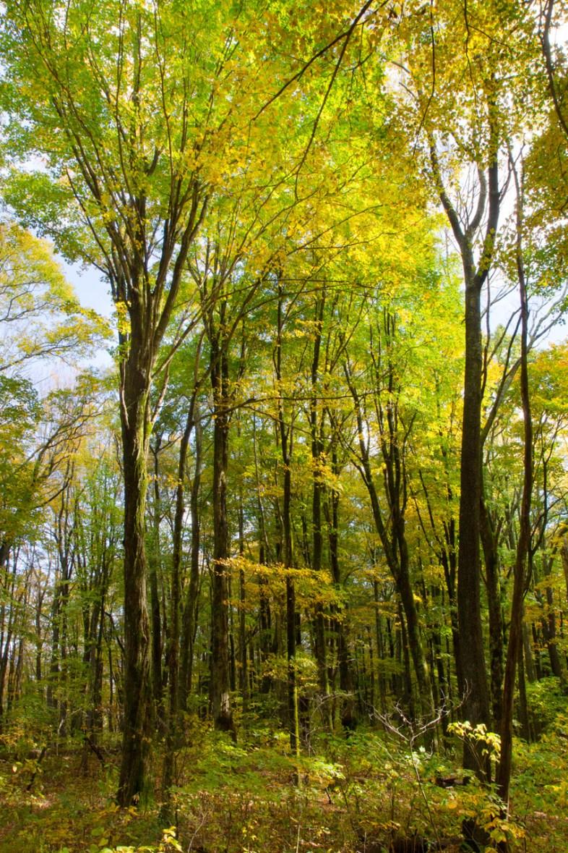 Sam's Gap Trail, Appalachian Trail, Mars Hill, NC Trail © Adel Alamo 2015