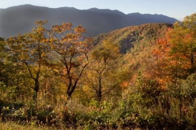 Overlook, Blue Ridge Parkway, Asheville, NC © Adel Alamo 2015