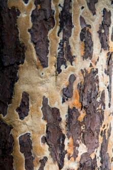 Lichen Pattern, Fort Louden State Park, Vonore, TN