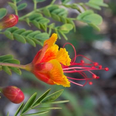 Flower, Possum Long, Stuart, FL