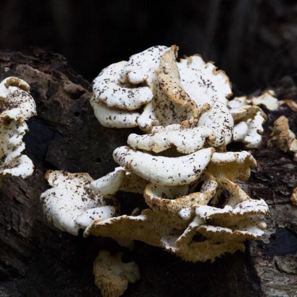 Face in the Fungi, Teague Hammock Preserve, Port St. Lucie, FL