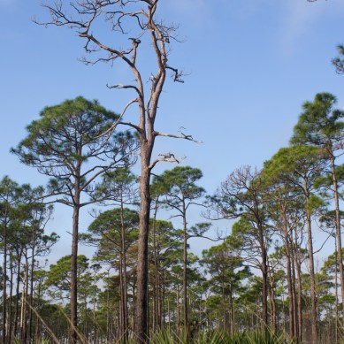 Kitching Creek Trail, Jonathan Dickinson State Park, Hobe Sound, FL