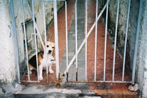 adelaide ivanova_dogs (7)