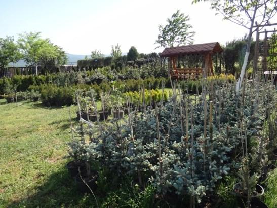 Pepiniera Dream Gardens