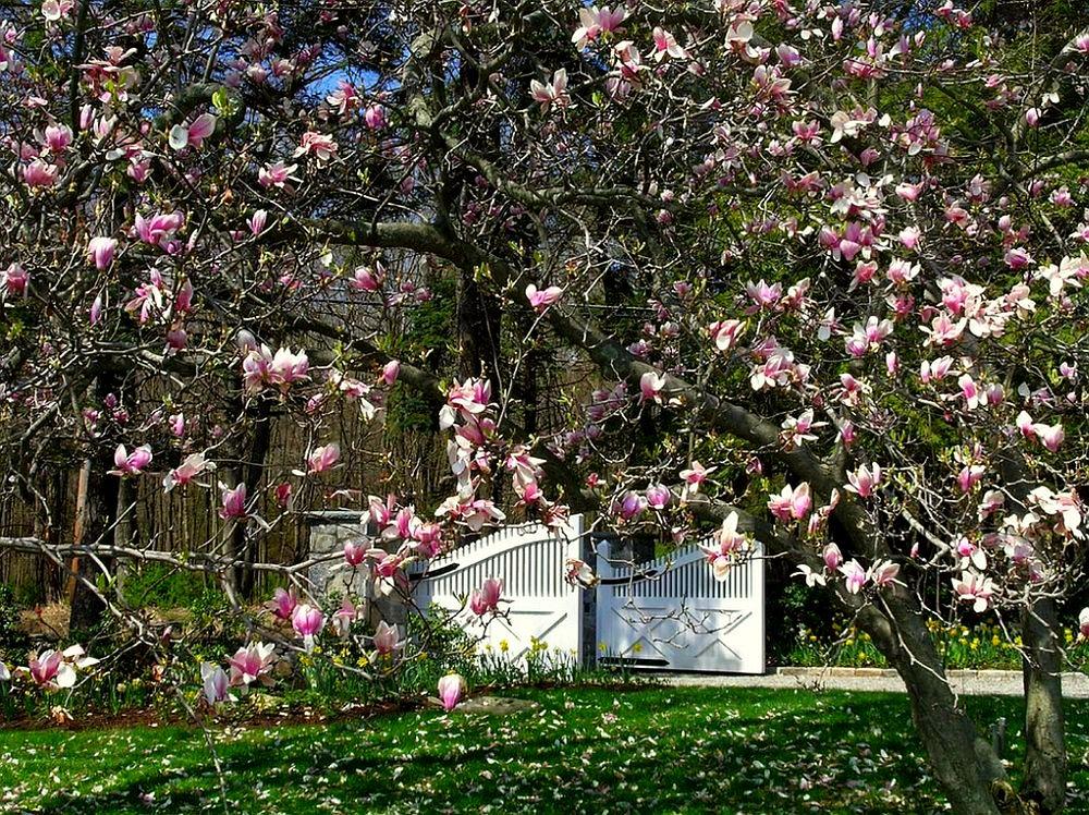 adelaparvu.com despre Magnolia, text Carli Marian (5)
