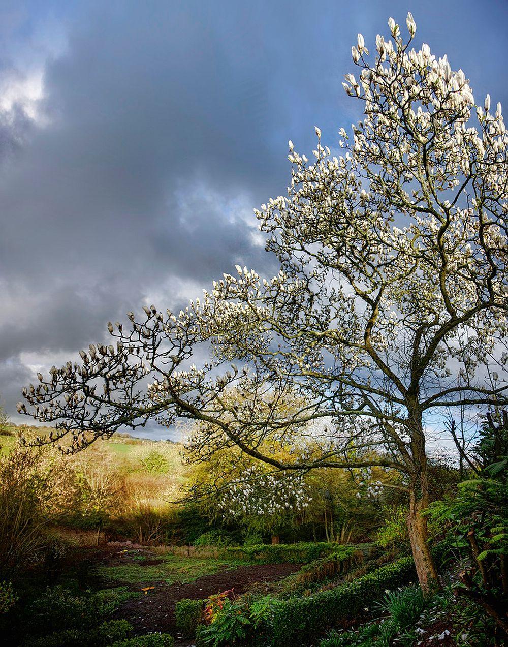 adelaparvu.com despre Magnolia, text Carli Marian (7)