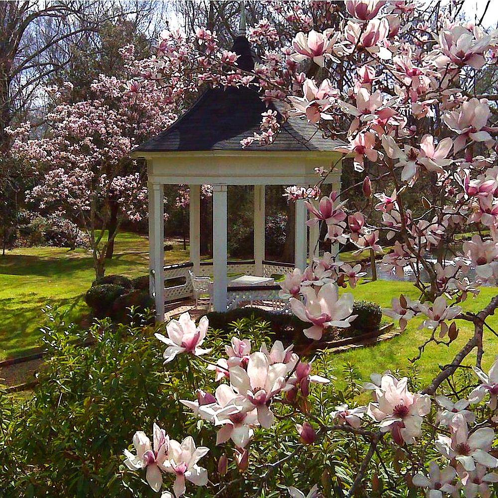 adelaparvu.com despre Magnolia, text Carli Marian (9)