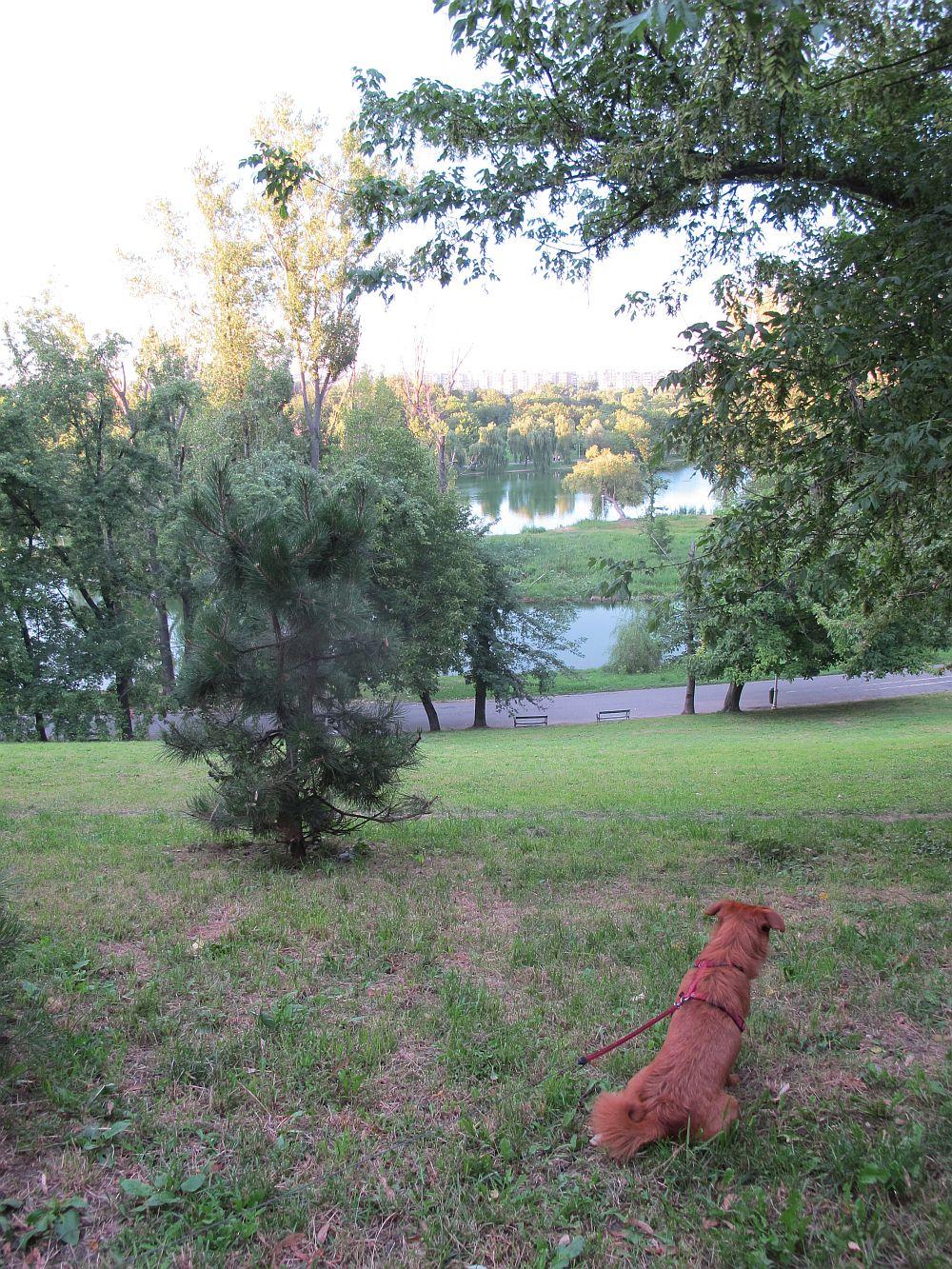adelaparvu.com despre The Park, complex rezidential Bucuresti, imagini Parcul Tineretului (1)