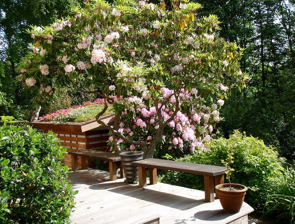 adelaparvu.com despre acoperis cu plante, gradina pe acoperis, acoperis verde, design Noland landscape Design, Foto  Bill Noland(1)