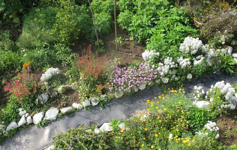adelaparvu.com despre gradina la munte, gradina cu flori si legume (19)