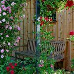 adelaparvu.com despre 5 sfaturi pentru trandafiri cataratori, Text Carli Marian, Foto landscape.si foto