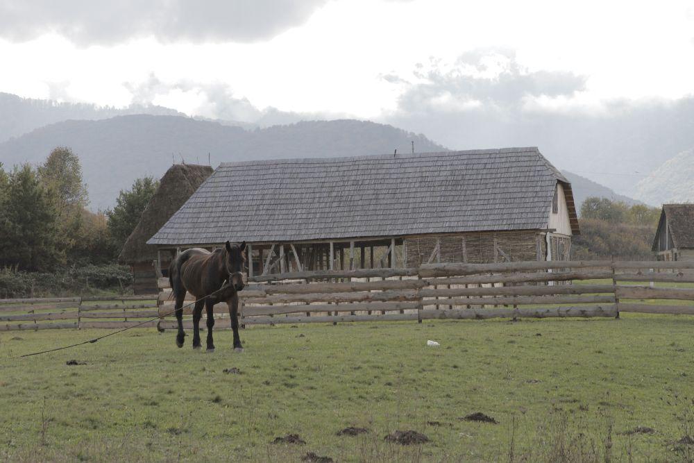 adelaparvu.com despre Alexandra Teodor si Stefan Carstea peisagistii care s-au mutat la tara in Cartisoara (9)
