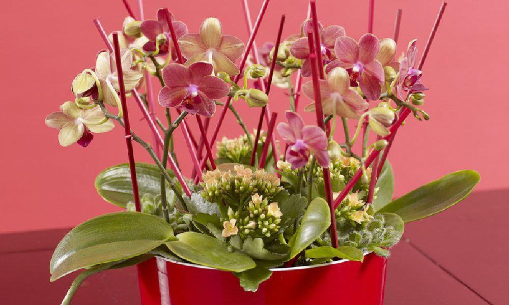 adelaparvu.com top 10 cele mai citite articole despre flori, plante, gradini in 2015 (5)