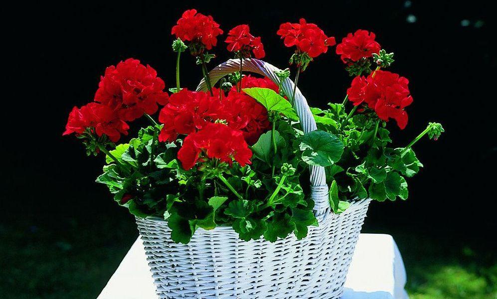 adelaparvu.com top 10 cele mai citite articole despre flori, plante, gradini in 2015 (9)