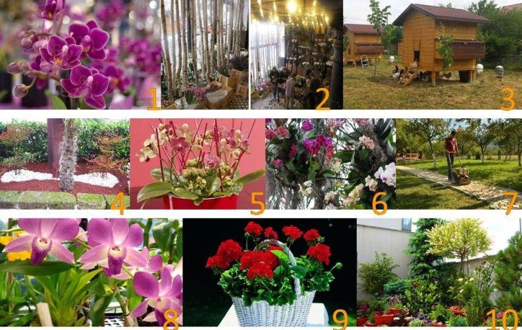 adelaparvu.com top 10 cele mai citite articole in 2015 despre flori, plante, gradini