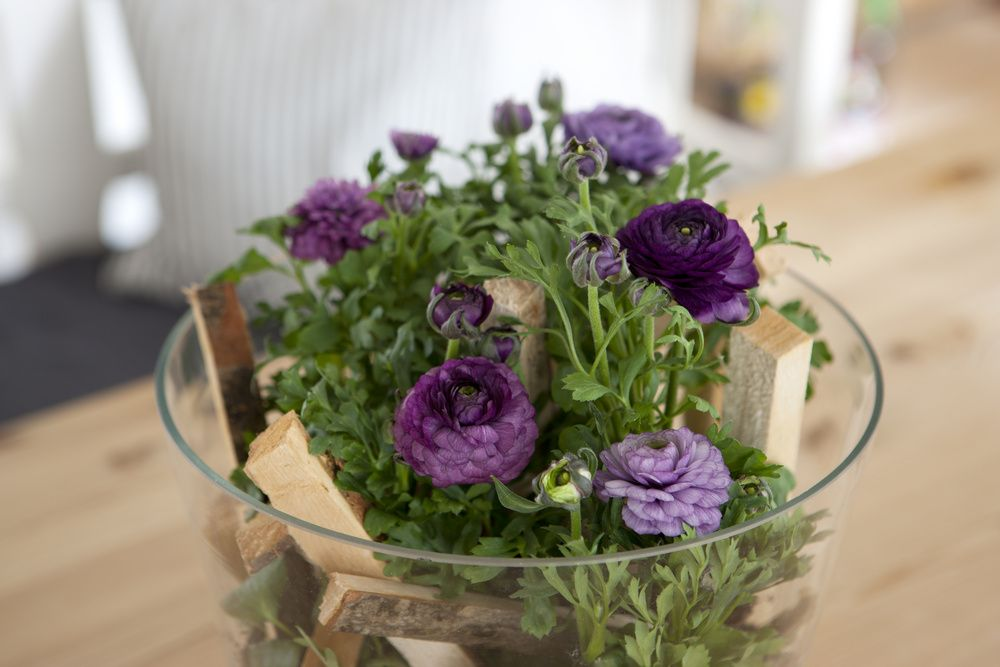adelaparvu.com despre Ranunculus, Text Carli Marian, Foto Floradania (4)