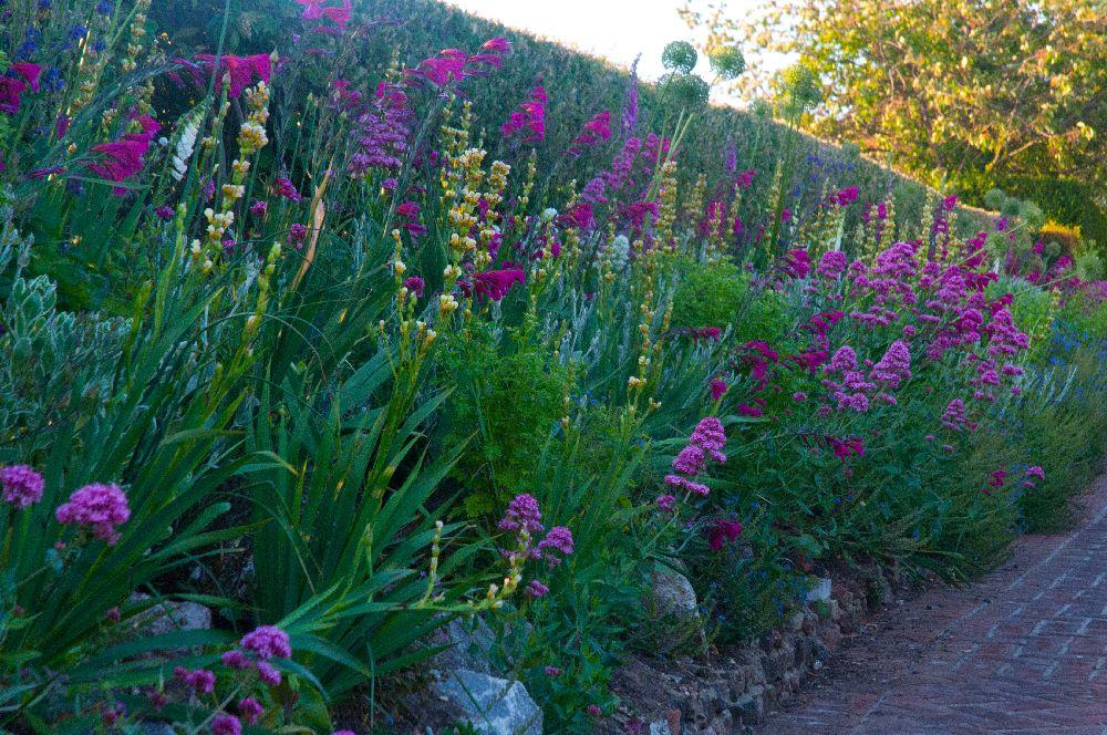 Gladiole si Allium