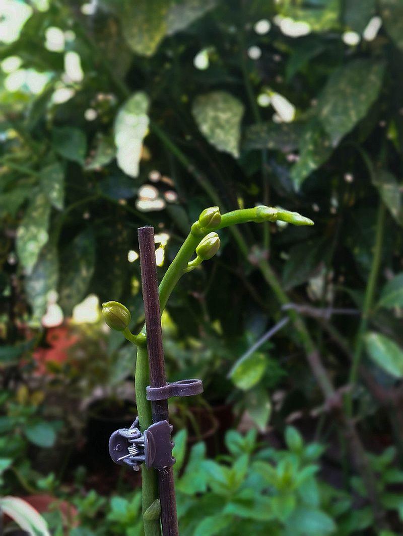 adelaparvu.com despre fertilizant orhidee, Pokon Powerspray pentru orhidee, text Carli Marian (2)