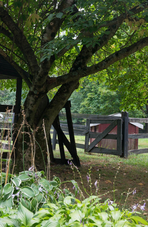 adelaparvu.com despre casa din lemn cu interior rustic actual, Design Kelly Mittleman, arch Mark Finlay, Foto Jane Beiles (3)