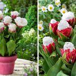 adelaparvu-com-dspre-plantare-bulbilor-de-primavara-text-carli-marian-4