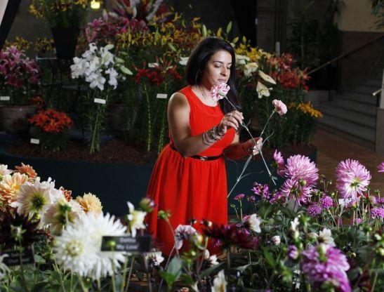 Garoafe aranjate la evenimentul RHS Autumn Harvest Show 2011