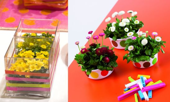 Primula si daisy (stanga) si bellis (dreapta). De remarcat vasele si culorile vii.