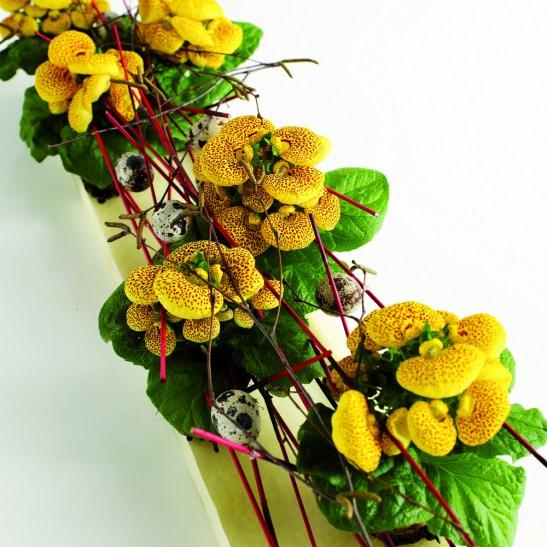 Aranjament cu mai multe ghivece de Calceolaria hybrid care merg puse pe centrul mesei de Paste.