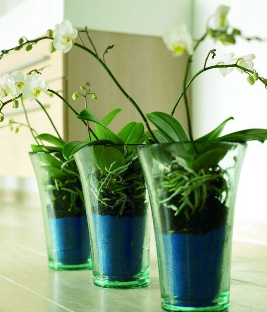 adelaparvu.com despre orhidea Phalenopsis Foto Floradania (5)