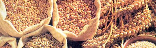 Los cereales integrales pueden ser la solución para bajar de peso
