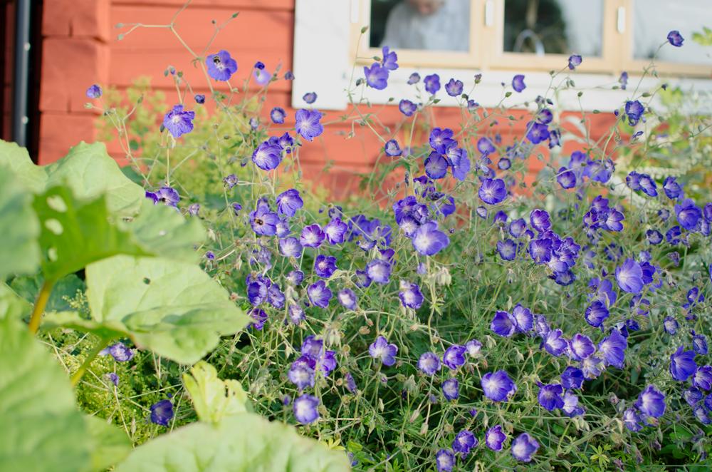 frontofthehouseflowers