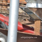 Of Seed Wheat and Drilling