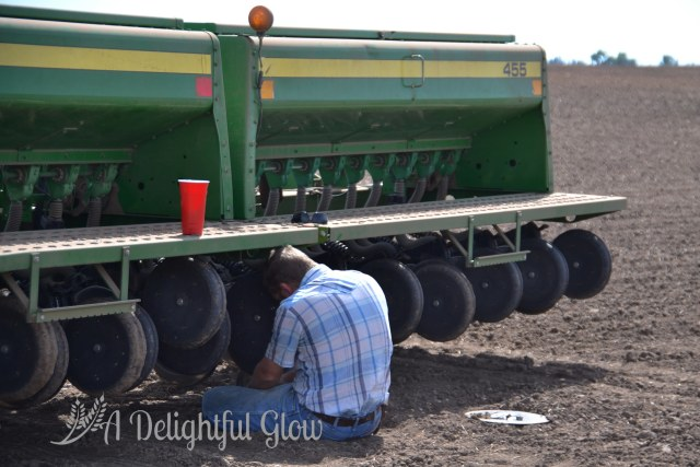 drilling-the-wheat-2016-5