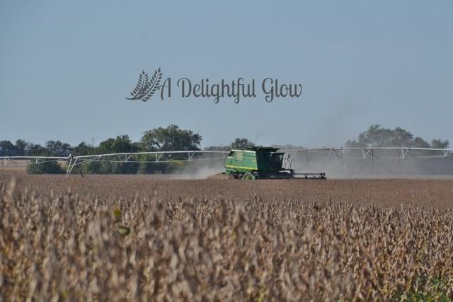 soybean-harvest-2016-6