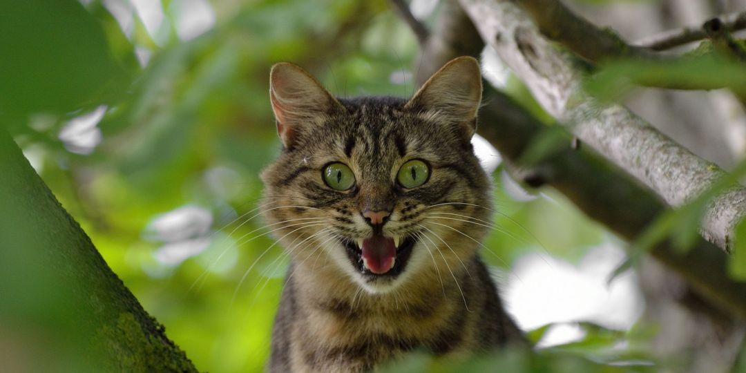 gato-asombro