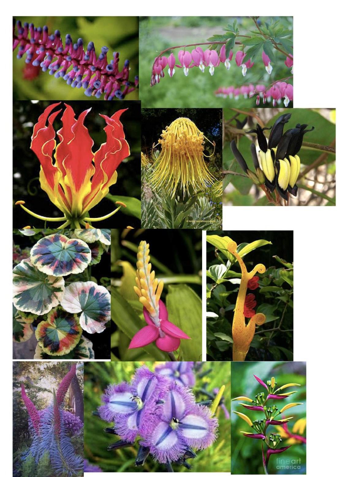 Flower inspiration images