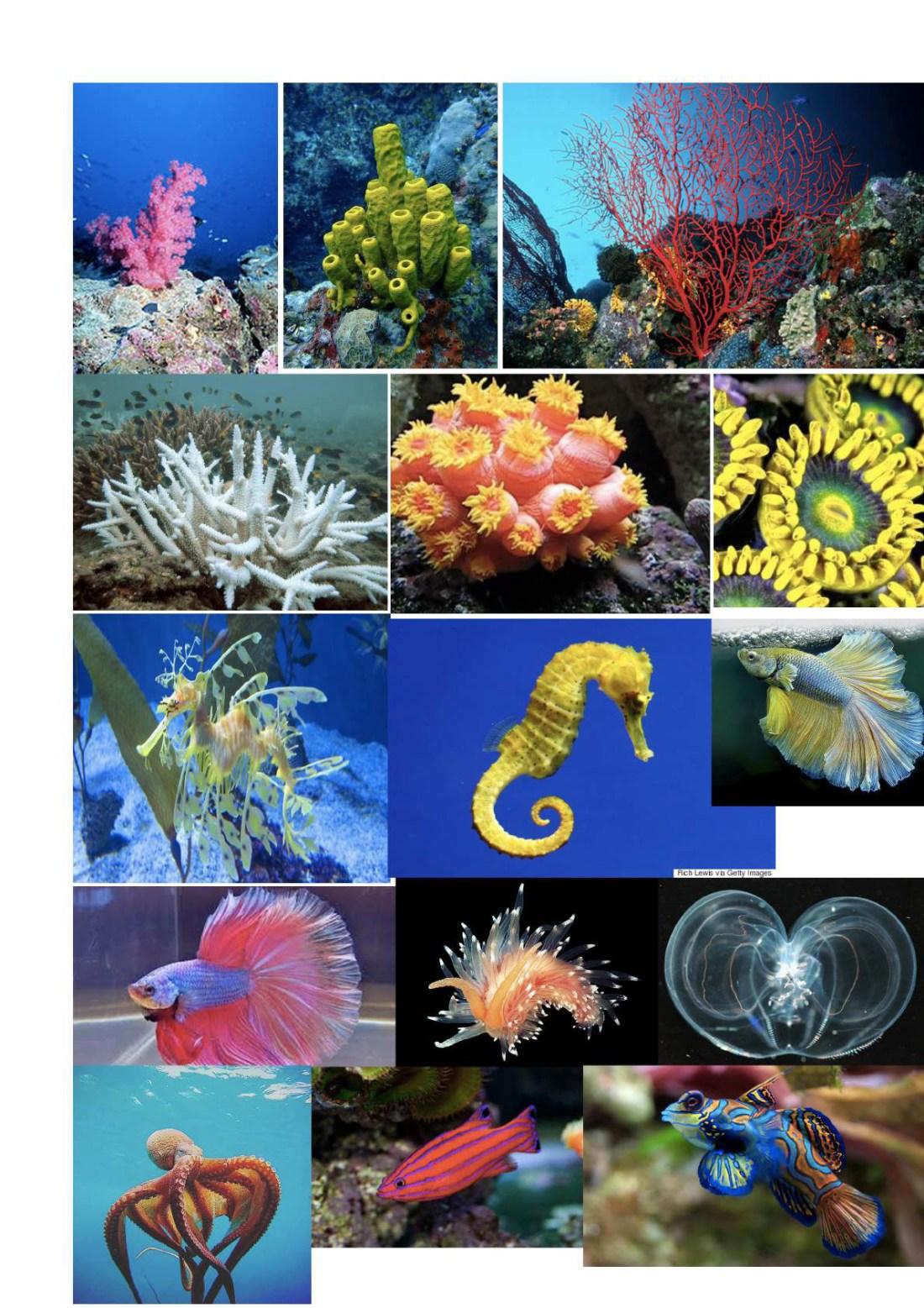 Underwater Inspiration images