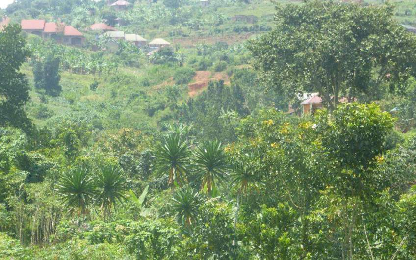 3 Acres Of Land For Sale Mbalala