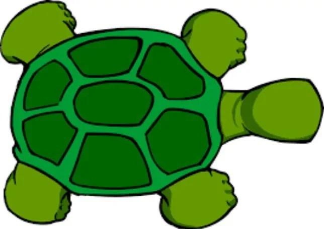 sketsa kura-kura kerajinan tangan dari sabun