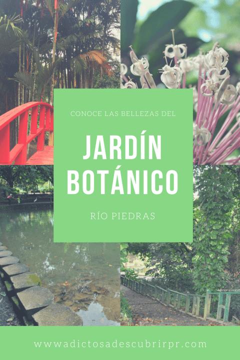 Conoce las bellezas del jard n bot nico en r o piedras for Bodas en el jardin botanico de rio piedras