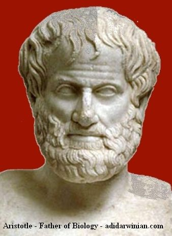 Aristotle - Father of Biology - Adidarwinian