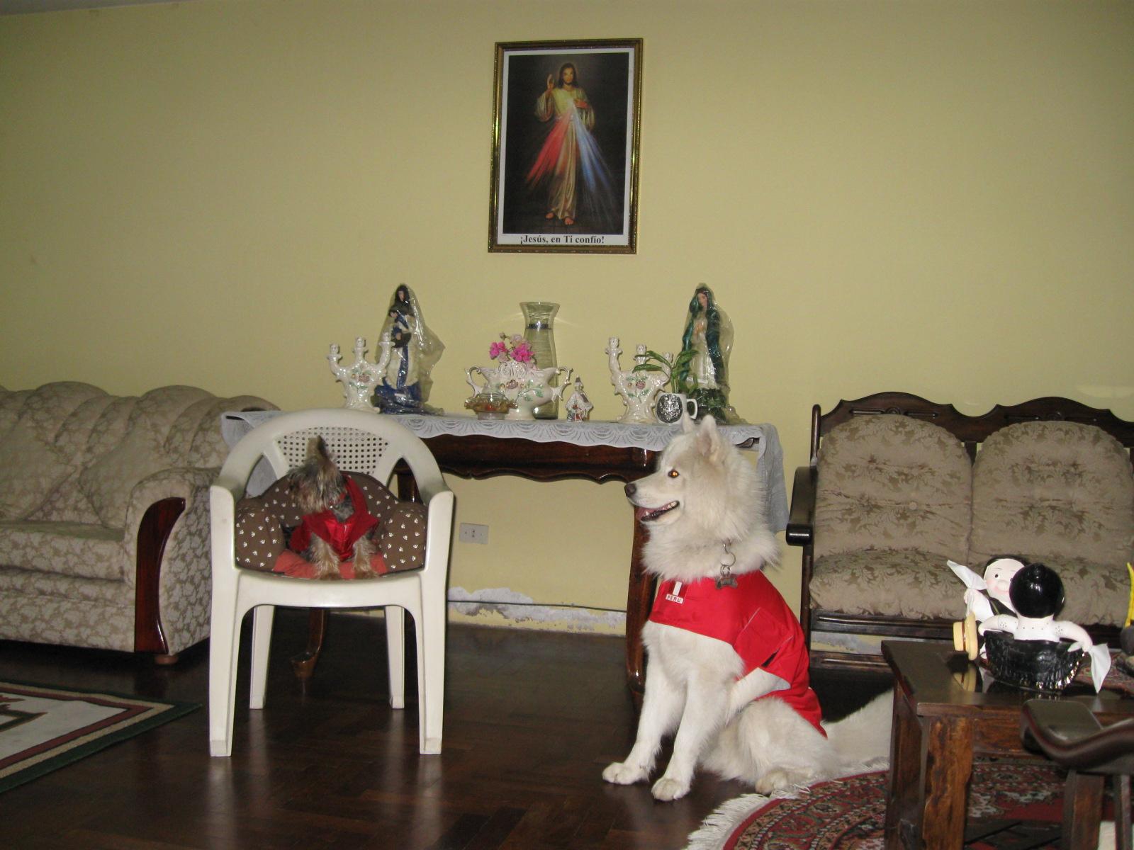 Pipo y Astor en la sala
