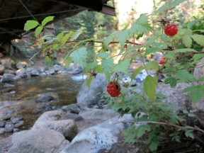 Fresh raspberries, trail food