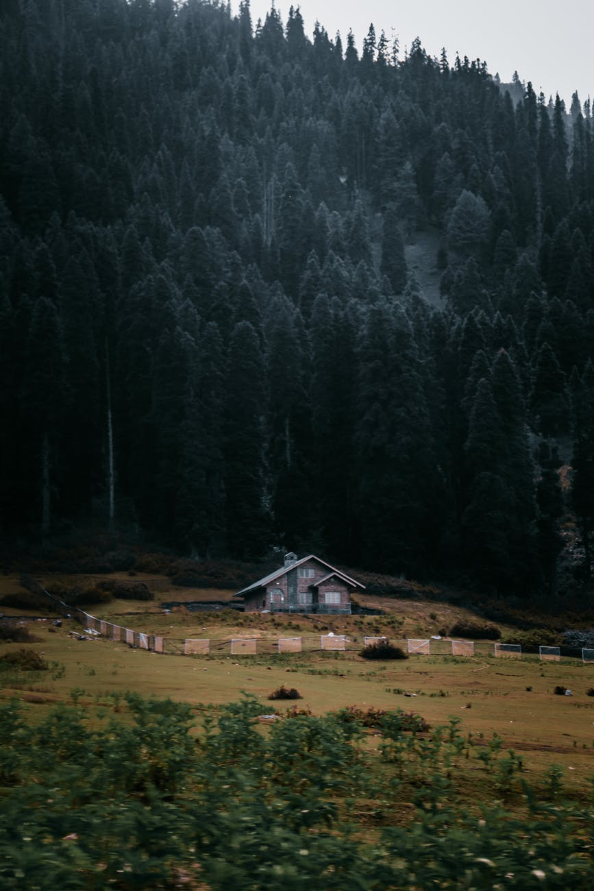 small house surrounded by coniferous trees growing on slope
