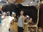 the moose is still here!
