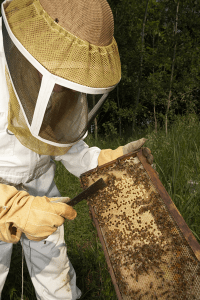 Bee removal San Diego