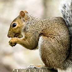 Gopher-Mole-Rats-Squirrels